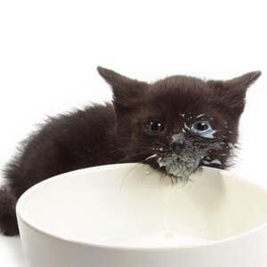 Mlieko pre mačičky