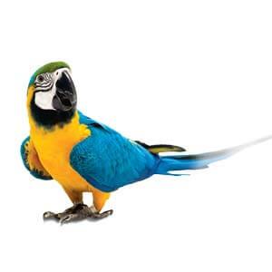 Exotické vtáky