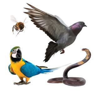 Holuby, exotické vtáky, včely a plazy
